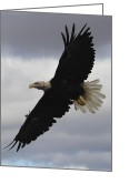 Release Greeting Cards - Bald Eagle Release 5 Greeting Card by Roger  Rekstad