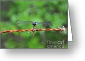 Al Powell Photography Usa Greeting Cards - Bar Winged on Barbed Wire Greeting Card by Al Powell Photography USA
