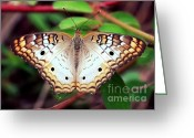 Carol Groenen Greeting Cards - Beautiful Butterfly Greeting Card by Carol Groenen