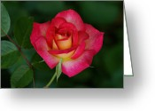Indiana Flowers Greeting Cards - Beautiful Rose Greeting Card by Sandy Keeton