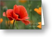 Kathy Gibbons Greeting Cards - Beauty Of The Field Greeting Card by Kathy Gibbons