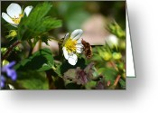 Pollinate Greeting Cards - Bee Fly Greeting Card by Christina Rollo