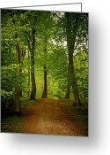 Odd Jeppesen Greeting Cards - Beeches Greeting Card by Odd Jeppesen