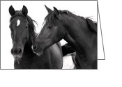 Wild Horses Greeting Cards - Best Buds Greeting Card by Rich Franco