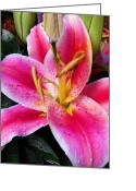 Stargazer Lilies Greeting Cards - Big Pink 1 Greeting Card by ABeautifulSky  Photography