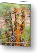 Larry Ricker Greeting Cards - Birch Trees Greeting Card by Larry Ricker