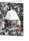 Perched Birds Greeting Cards - Birds on bird feeder in winter Greeting Card by Elena Elisseeva
