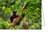 Black Bear Climbing Tree Greeting Cards - Black bear cub climbing in tree and looking around  - artistic Greeting Card by Dan Friend