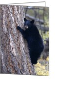 Black Bear Climbing Tree Greeting Cards - Black Bear Cub Hugging a Tree Greeting Card by WorldDesign Art