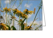 Natures Photos Greeting Cards - Black Eyed Susan From Below  Greeting Card by Neal  Eslinger