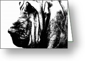 Dog Prints Greeting Cards - Bloodhound - Its Black And White - By Sharon Cummings Greeting Card by Sharon Cummings