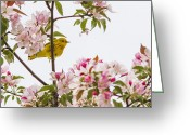Flower Blossom Greeting Cards - Blossom and bird Greeting Card by Mircea Costina Photography