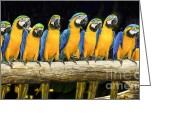Ara Ararauna Greeting Cards - Blue macaws sitting on log. Greeting Card by Anek Suwannaphoom