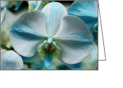 Orchids Photo Greeting Cards - Blue Orchid Greeting Card by William Dey