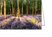Simon Bratt Photography Greeting Cards - Bluebells in shadows Greeting Card by Simon Bratt Photography