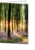 Simon Bratt Photography Greeting Cards - Bluebells in sunrise light Greeting Card by Simon Bratt Photography