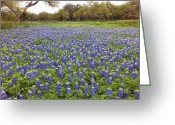 Texas Bluebonnets Greeting Cards - Bluebonnet Pasture Greeting Card by Bill Morgenstern
