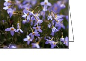 Forest Floor Greeting Cards - Bluets Greeting Card by David Rucker
