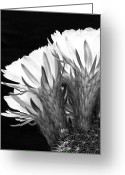 Kelley King Greeting Cards - Brilliant Blossoms Diptych Left Greeting Card by Kelley King