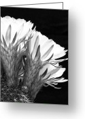 Kelley King Greeting Cards - Brilliant Blossoms Diptych Right Greeting Card by Kelley King