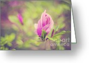 Burgeon Greeting Cards - Burgeon of Magnolia Greeting Card by Izabela Kaminska