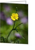 Yellow Flower Digital Art Greeting Cards - Buttercup Greeting Card by Christina Rollo