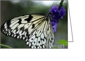 White And Purple Wings Greeting Cards - Butterfly Asian Swallowtail and Jasmine Greeting Card by Gail Matthews