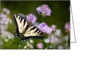 Feeding Digital Art Greeting Cards - Butterfly Dream Greeting Card by Christina Rollo