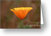 Kathy Gibbons Greeting Cards - California Poppy Greeting Card by Kathy Gibbons