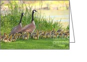 Canada Goose Greeting Cards - Canadian Geese Family Greeting Card by Jennie Marie Schell