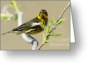 Larry Ricker Greeting Cards - Cape May Warbler Greeting Card by Larry Ricker