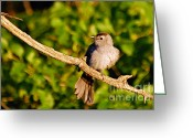 Larry Ricker Greeting Cards - Catbird Greeting Card by Larry Ricker