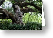 Old Tree Trunk Photo Greeting Cards - Cathedral Oak Greeting Card by Cecil Fuselier