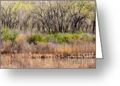 Chama River Greeting Cards - Chama River Bank Greeting Card by Lisa Gakyo Schaewe