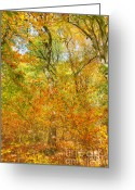 David Birchall Greeting Cards - Changing Color Greeting Card by David Birchall