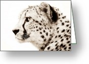 Big Cat Greeting Cards - Cheetah Greeting Card by Photodream Art
