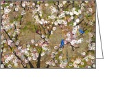 Interior Mixed Media Greeting Cards - Cherry Blossoms and Blue Birds Greeting Card by Blenda Tyvoll