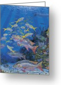 Cayman Greeting Cards - Chum line Greeting Card by Carey Chen