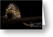 Black Leopard Greeting Cards - Clouded Existence Greeting Card by Ashley Vincent