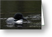 Larry Ricker Greeting Cards - Common Loon 1 Greeting Card by Larry Ricker