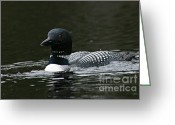 Larry Ricker Greeting Cards - Common Loon 2 Greeting Card by Larry Ricker