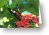 Butterflies And Blue Flowers Greeting Cards - Contrasting Butterfly Greeting Card by Mario  Perez