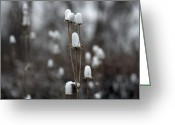 Winter Art Greeting Cards - Cotton Tops Greeting Card by Gothicolors With Crows