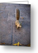 Hdr Look Photo Greeting Cards - Curious Squirrel Greeting Card by Michele Stoehr