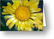 Reese Greeting Cards - Daisy Greeting Card by Joy Reese
