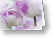 Jenny Rainbow Greeting Cards - Dappled Tulips. The Tulips of Holland Greeting Card by Jenny Rainbow