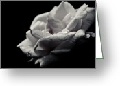 Grebo Gray Greeting Cards - Dark Flower 12 Greeting Card by Grebo Gray