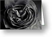 Grebo Gray Greeting Cards - Dark Flower 15 Greeting Card by Grebo Gray