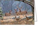 Whitetail Deer Greeting Cards - Deer Art - First Snow Greeting Card by Dale Kunkel