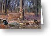 Whitetail Deer Greeting Cards - Deer Art - Perfect Ten - Whitetail Deer Buck Greeting Card by Dale Kunkel